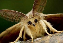Cum reușește molia să distrugă hainele dacă nu le mănâncă