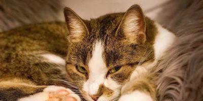 De ce o pisică doarme lângă un om? 5 motive