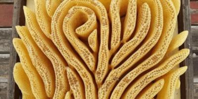 Albinele construiesc un stup în formă de inimă dacă nimic nu le limitează