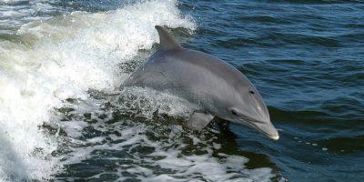 Ce beau delfinii și balenele dacă există doar apă sărată în jur