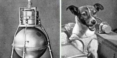 Cățelușa Laika: povestea tristă a primei ființe care a zburat în spațiu