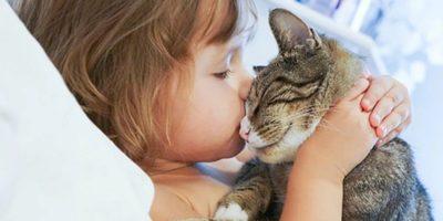 De ce o pisică ar trebui să trăiască într-o casă: 5 motive