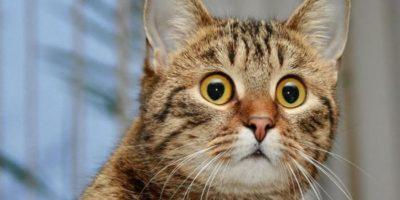 De ce o pisică privește în gol și șuieră? Ce vede ea acolo