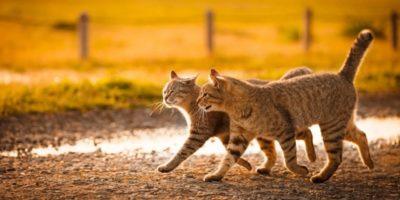 10 secrete uimitoare pe care pisicile le ascund de proprietari