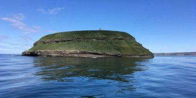 Insula privată unde turiștii se uită prin binoclu că să vadă păsări rare