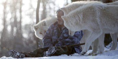 Lupii atacă foarte rar oamenii. De ce concepția de lup rău este eronată?