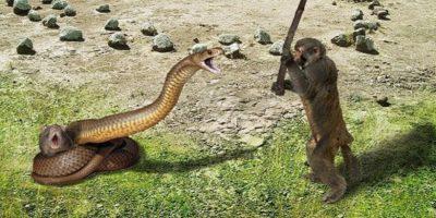 De ce oamenii și maimuțele se tem atât de mult de șerpi
