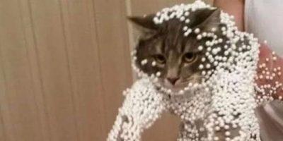Imagini cu pisici în situații incomode
