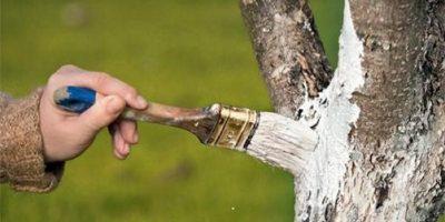 De ce oamenii dau cu var pe trunchiurile copacilor