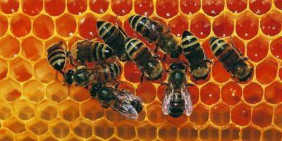 De ce albinele construiesc cu precizie celule în 6 unghiuri?