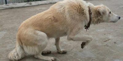 9 lucruri pe care un câine încearcă să ni le spună prin gesturi