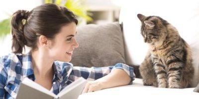 Cercetătorii japonezi au dovedit: pisicile pot înțelege vorbirea umană