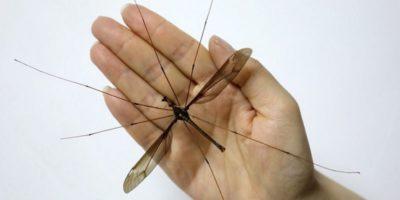 Cel mai mare țânțar din lume a fost descoperit în China