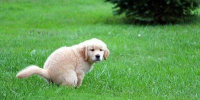 De ce câinii se învârt în cerc înainte să-și facă nevoile?
