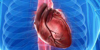 De ce nu există cancer de inimă?