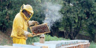 De ce fumul calmează albinele?