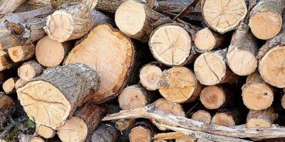 Câți copaci sunt necesari pentru a produce o tonă de hârtie?