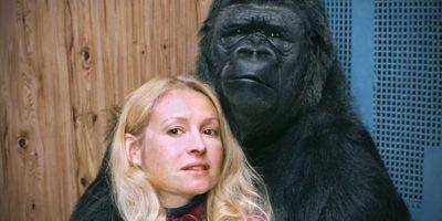 Gorila care a început să vorbească. Un experiment incredibil