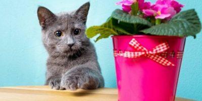 De ce pisicile adoră să răstoarne lucrurile?