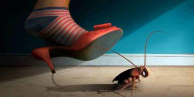 De ce este atât de greu să scapi de gândaci?
