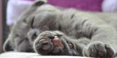 Atacul silențios: 5 curiozități despre labele pisicilor