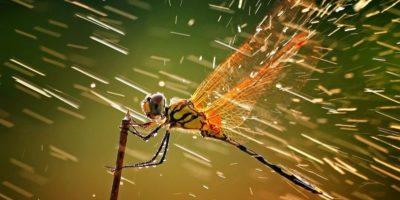 De ce picăturile de ploaie nu ucid insectele?