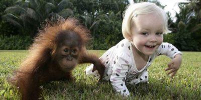 De ce maimuțele nu se mai transformă în oameni?