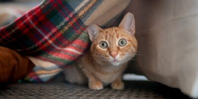 4 lucruri pe care nu trebuie să le faci în prezența pisicii