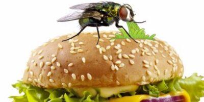 Ce se întâmplă când o muscă aterizează pe mâncare?