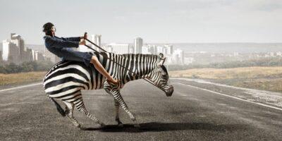 De ce oamenii nu folosesc zebrele precum caii?