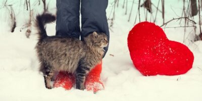 De ce pisicile își freacă capul de diverse lucruri?
