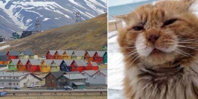 De ce sunt interzise pisicile în Arhipelagul Svalbard din Norvegia?