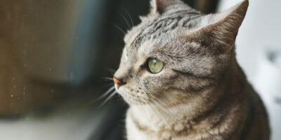 Cât timp rezistă o pisică singură în casă?
