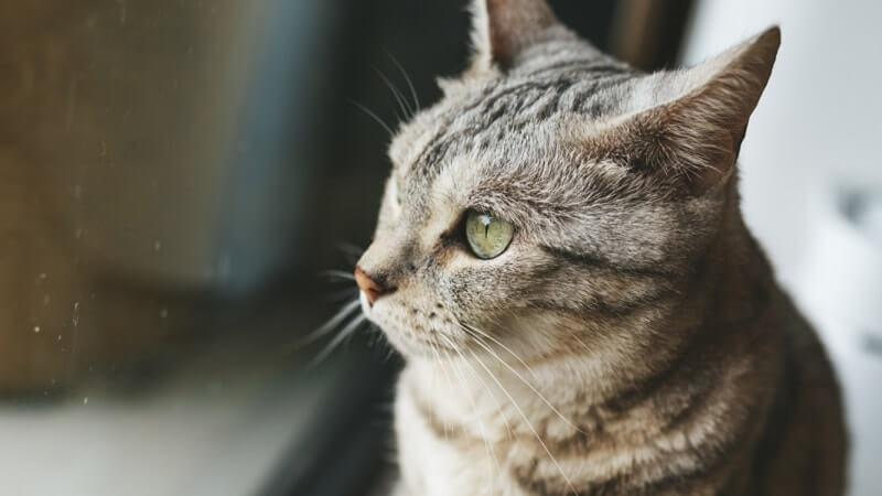 Poate O Fată Necăsătorită Sau O Femeie Singură Să Obțină O Pisică?   Interesant