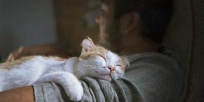 Cum să-ți faci pisica să te iubească?