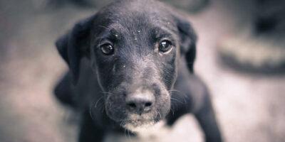 Semnele durerii la câini: cum știi dacă suferă