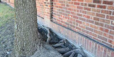 Ce copaci nu trebuie plantați lângă o casă