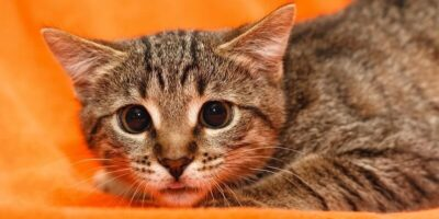 7 lucruri de care pisicile se tem cel mai mult