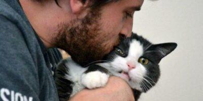 De ce pisicile iau sărutul nostru ca pe o insultă?