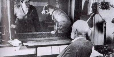 """""""Câinele lui Pavlov"""". Experimentul care a revoluționat psihologia"""