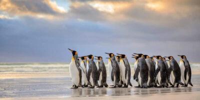 20 de curiozități interesante despre pinguini