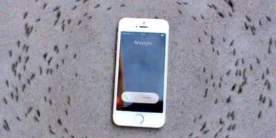 De ce furnicile se învârt în cerc în jurul unui iPhone?