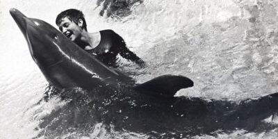 Povestea lui Peter: Delfinul care s-a îndrăgostit de o femeie și s-a sinucis de dorul ei