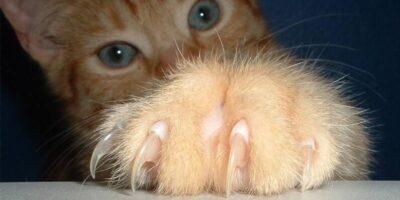 Armele secrete: 5 curiozități despre labele pisicilor