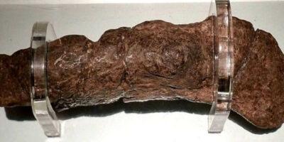 Excrementele fosilizate ale unui viking de acum 1.000 de ani dezvăluie dieta și starea de sănătate