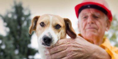 9 lucruri pe care câinii le pot prezice