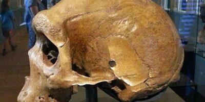 Misterul craniilor de acum 300.000 de ani cu găuri de glonț