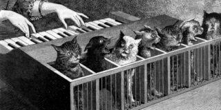 Pianul cu pisici, instrumentul bizar creat pentru amuzamentul regilor