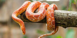 Șerpii au oase?