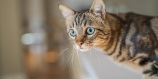 Cum recunoști că pisica ta este inteligentă: 5 semne care nu dau greș